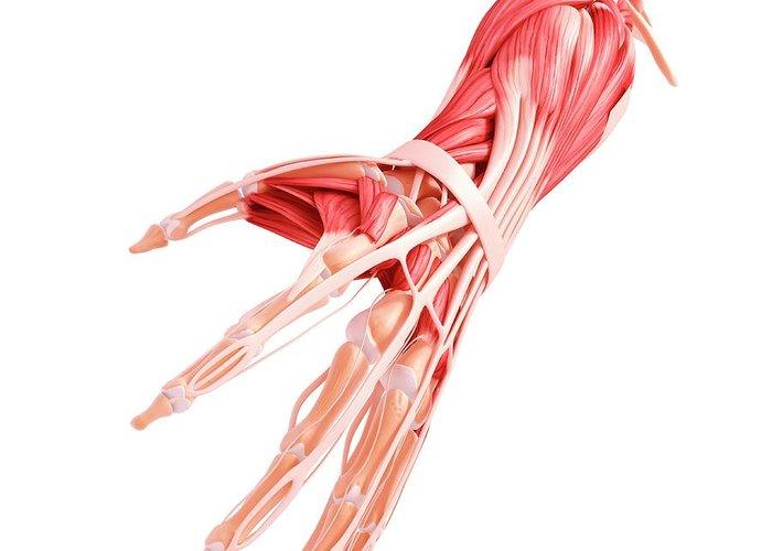 31-human-arm-musculature-pixologicstudioscience-photo-library.jpg